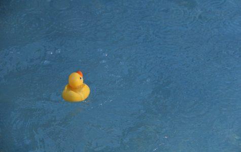 Launching of the Ducks