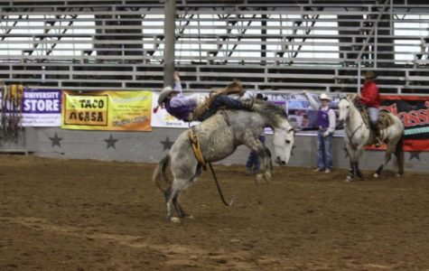 Tarleton qualifies 11 competitors for College National Finals Rodeo