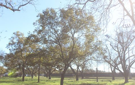 Tarleton student begins petition to save pecan trees