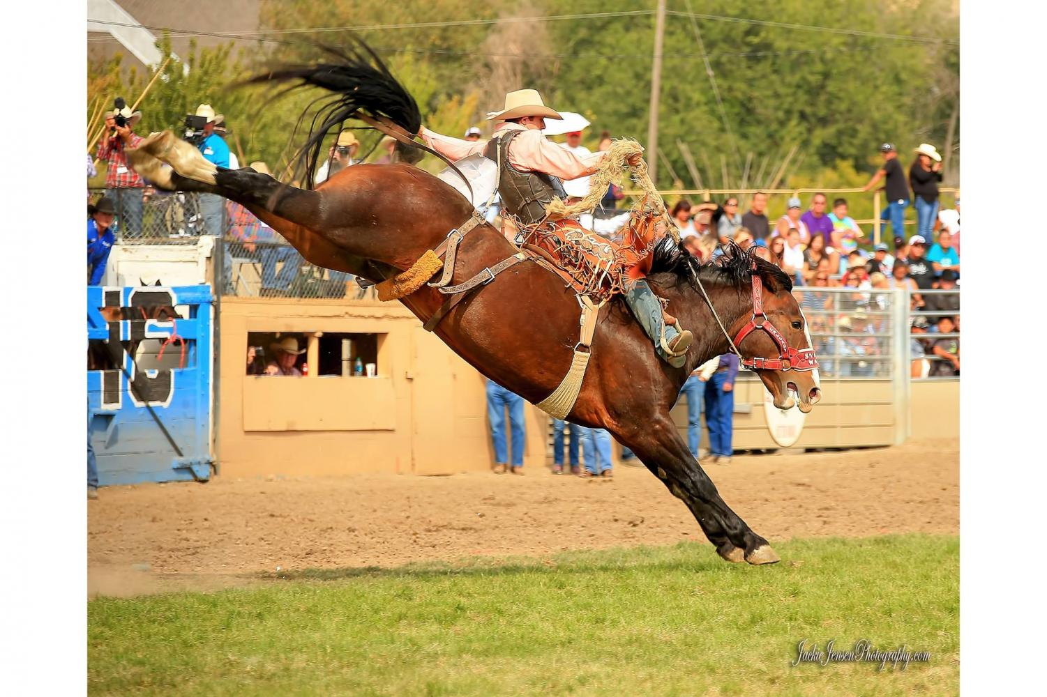 Brody Cress is off to The American Rodeo