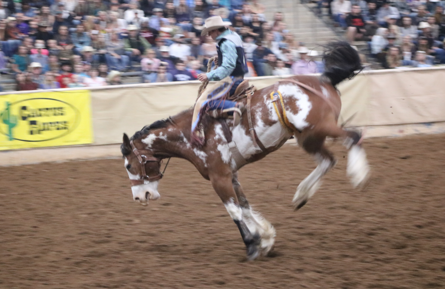 Saddle bronc rider competes during the Tarleton Stampede on April 26, 2018.