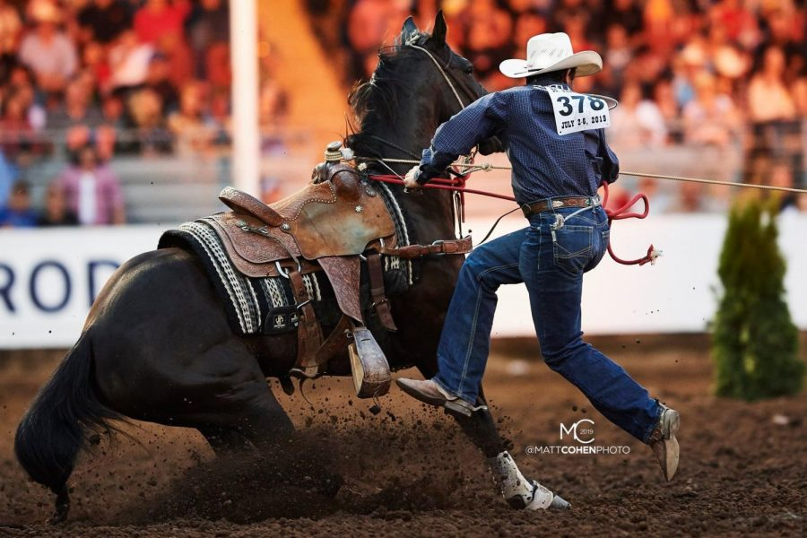 Haven Meged hops off of his horse to chase after the calf as part of his performance in the Tie-Down Roping competition.