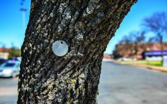 The tree tags are part of a system that allows trees to be identified for maintenance purposes and while some may have the year they were planted, most have a unique number. Also many of the trees are missing tags or are not easily accessible anymore.