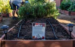 The Tarleton community garden located next to the  Clyde H. Wells Fine Arts Center.